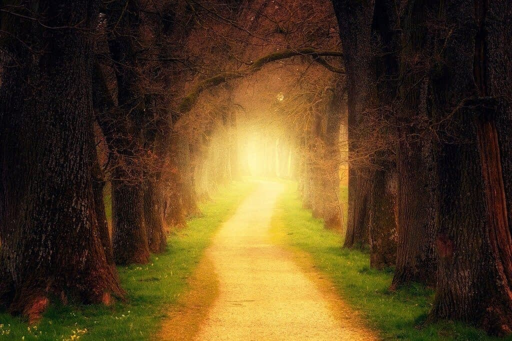 magical looking forest path with golden light shining at the end